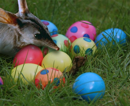 easter-bilby-with-eggs